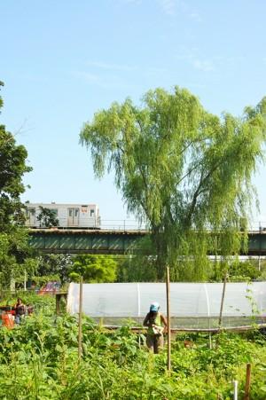 East New York Farms