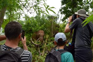 Some of our guests enjoying their time in the forest with the elephants.