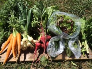 Long Lane Farm harvest 2021